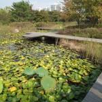 Big lake with lily pads