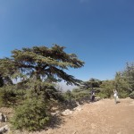 Taking pictures with the cedar trees