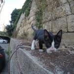 Tux, the cute street kitten