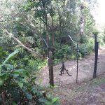 Spider Monkey in Belize Zoo