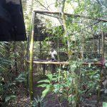 Vulture in Belize Zoo
