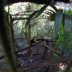 Tucan in Belize Zoo