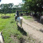 Trail ride to Xunantunich Mayan Ruins
