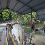 Ferry ride across Mopan River