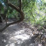 Trail through nature reserve on Caye Caulker