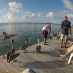 Feeding frigates and pelicans at Iguana Reef Inn