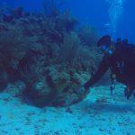 Green Moray eel coming out to check out divers