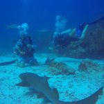 Nurse sharks hanging out and checking us out