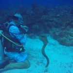 Green Moray eel looking for handouts